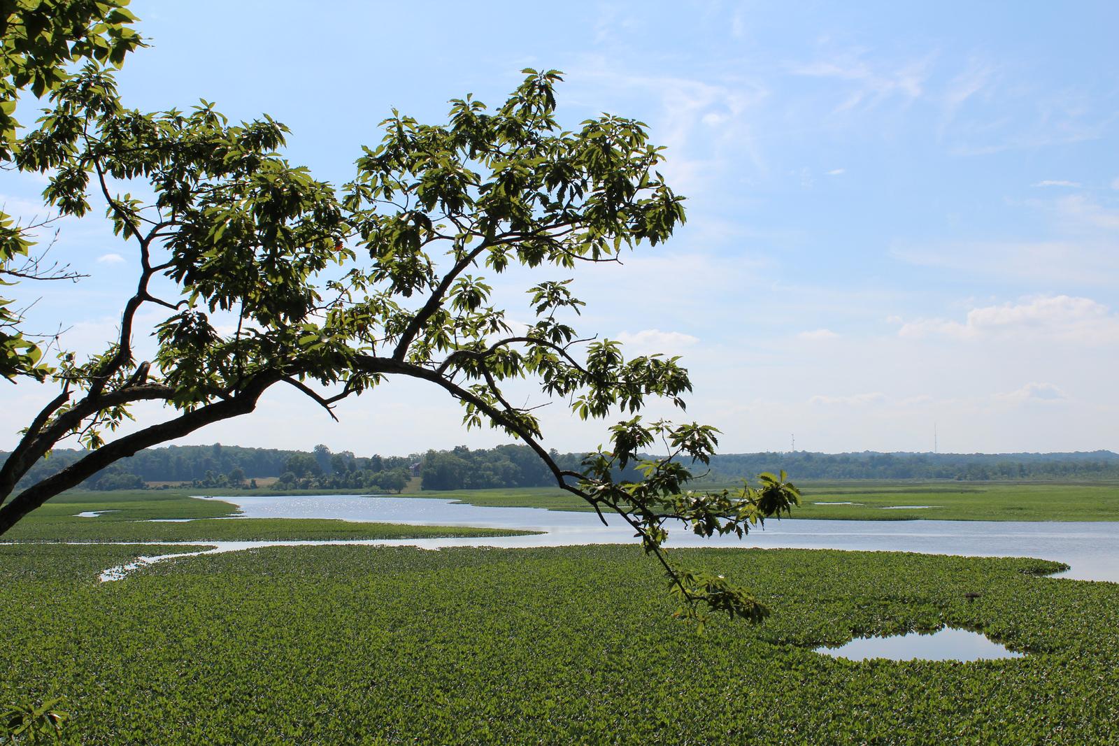 Jug Bay Wetlands Sanctuary